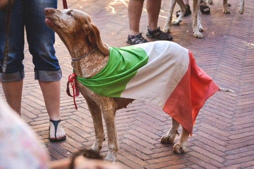 raduno mondiale bracco italiano allevamento di casamassima di valravanaga di cascina croce di montericco dei sanchi polcevera