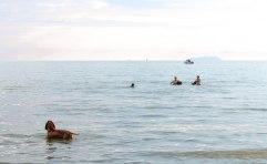 cane mare paura acqua bracco italiano