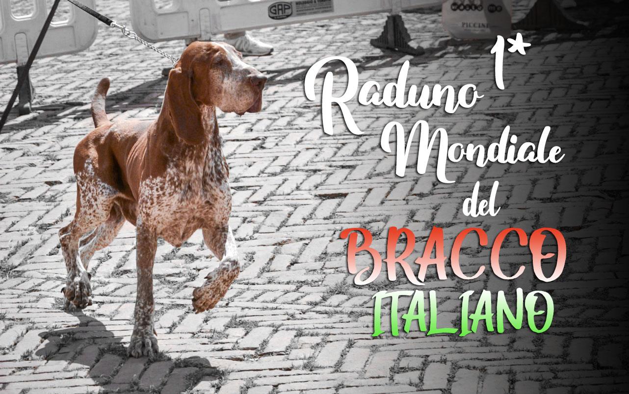 raduno mondiale bracco italiano