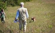 prova caccia bracco italiano cane da cerca da ferma da piuma da riporto