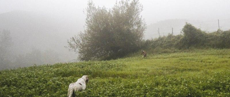 caccia setter inglese nebbia