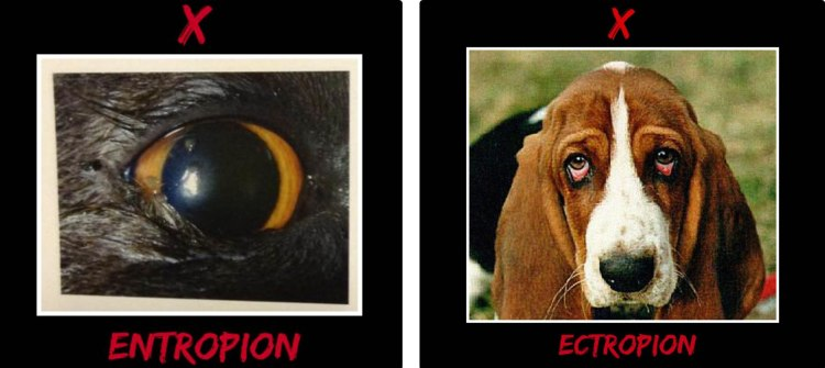 entropion ectropion