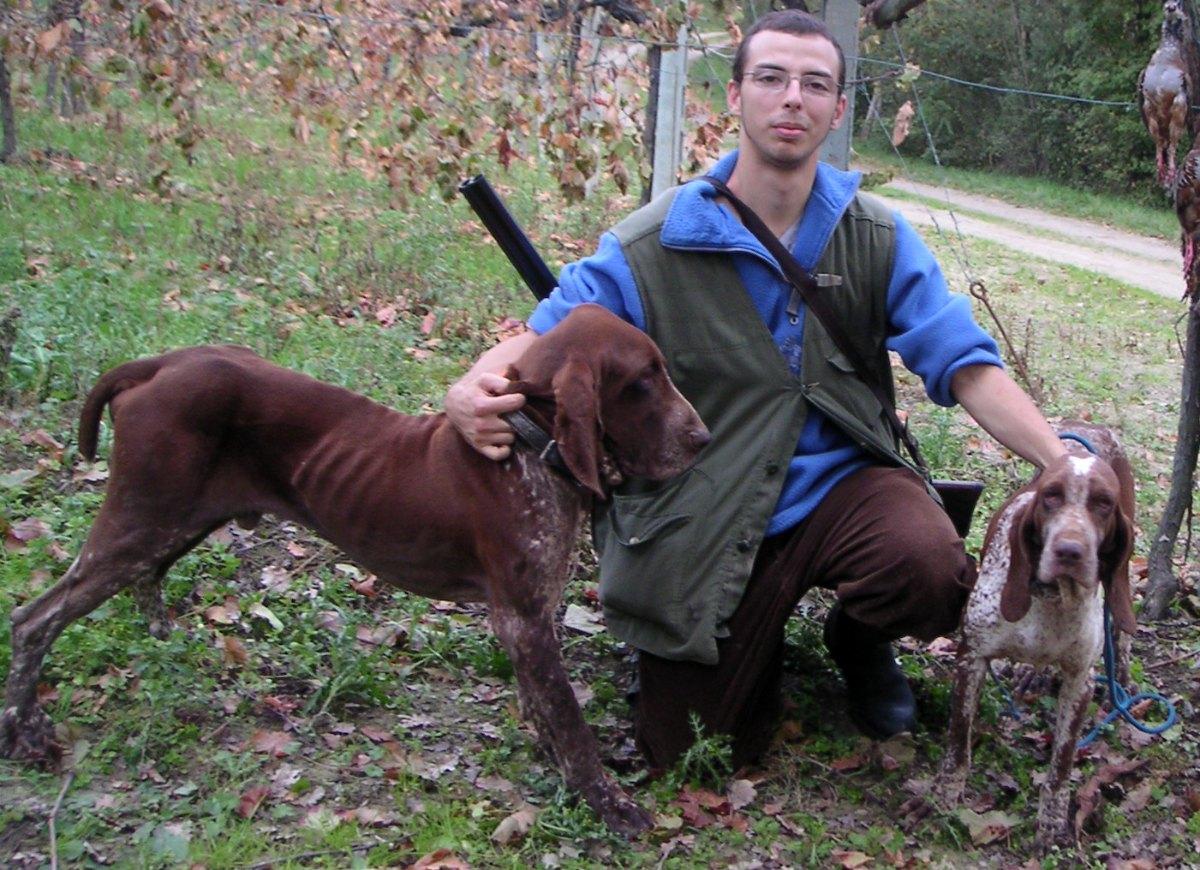 caccia bracco italiano roano