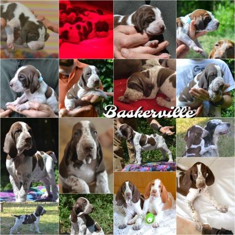 Baskerville aka Felice