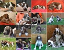 Raniero aka Dante