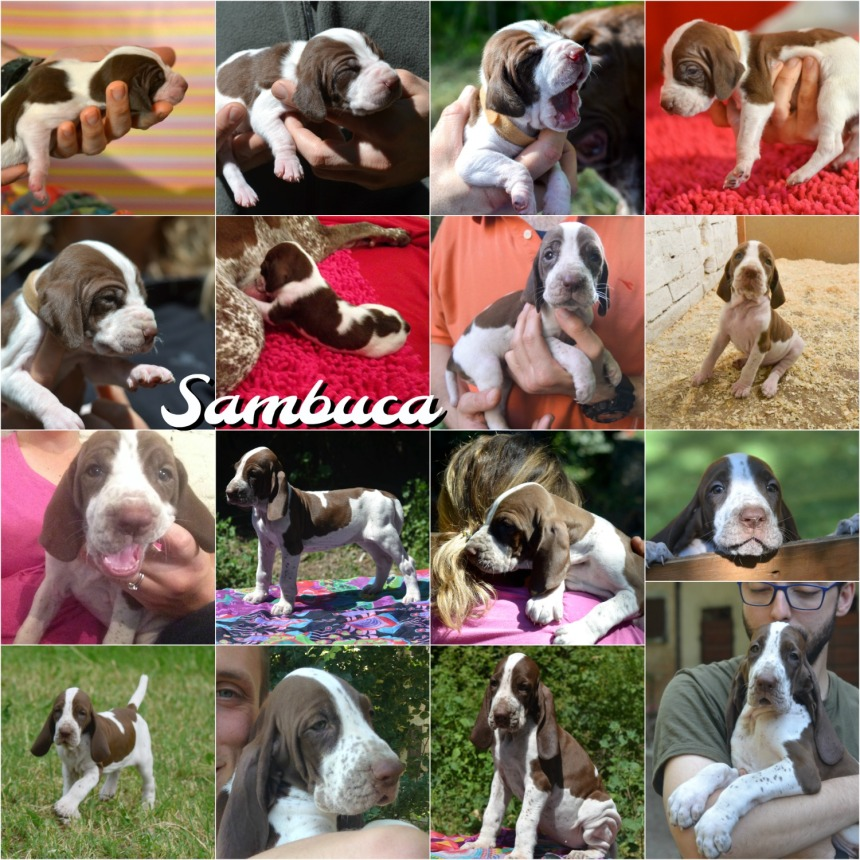Sambuca aka Fiona