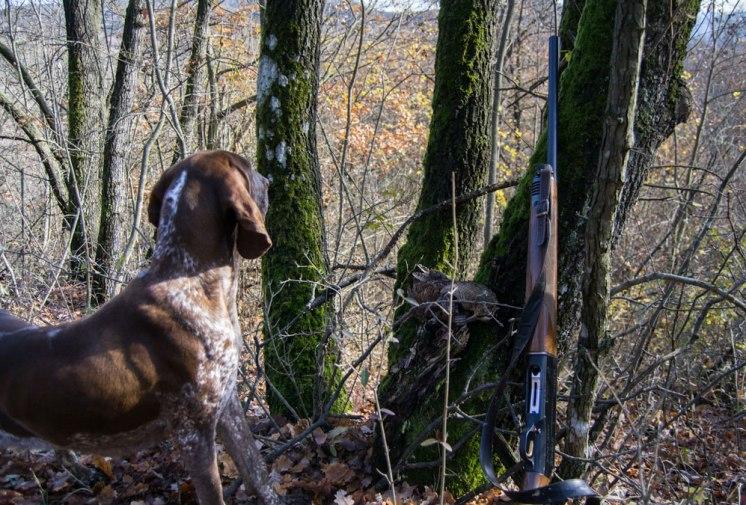 cane da caccia ferma beccaccia bracco italiano
