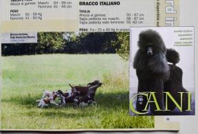 Olena & le Piccole Idrovore @ I nostri cani - Aprile 2018