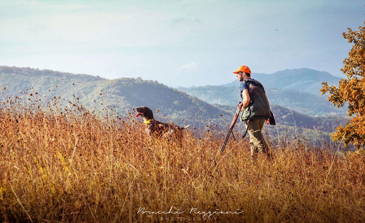 caccia bracco italiano