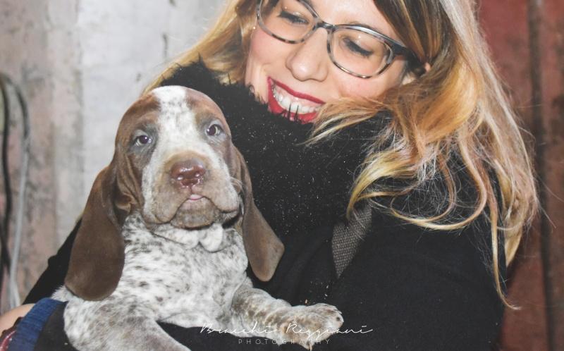 10 cose bracco italiano cucciolo