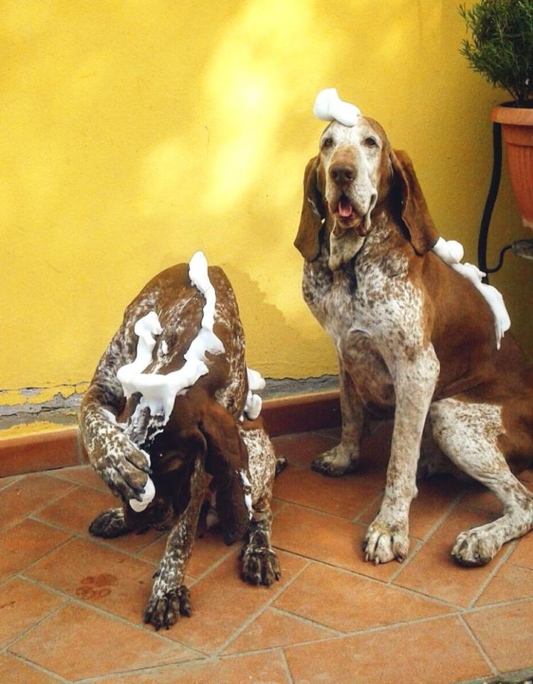 bagno lavaggio cani bracchi