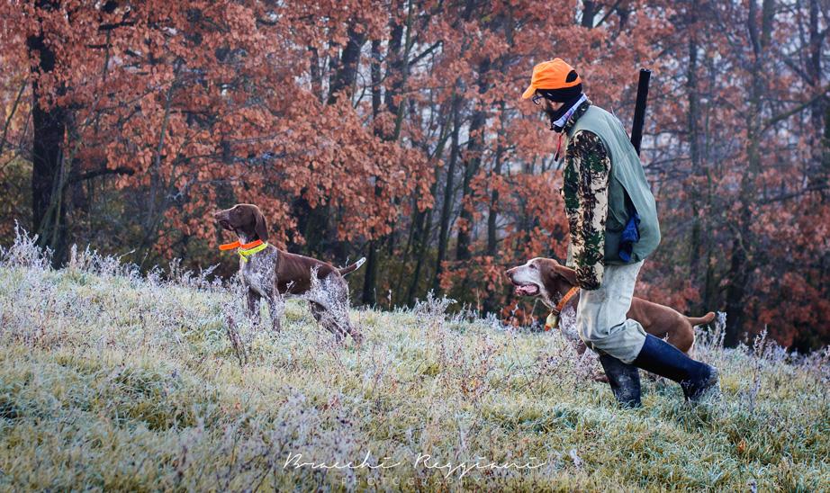 caccia col bracco