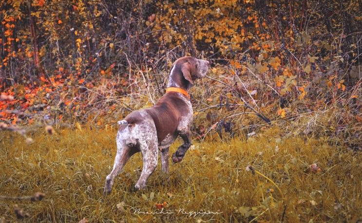 ferma cane caccia