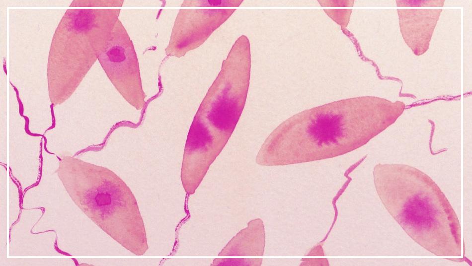 leishmania infantum leishmaniosi