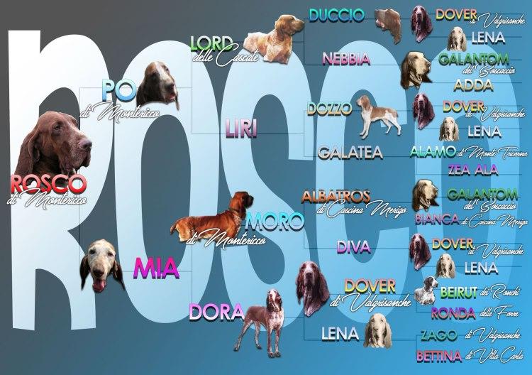 pedigree illustrato foto cani