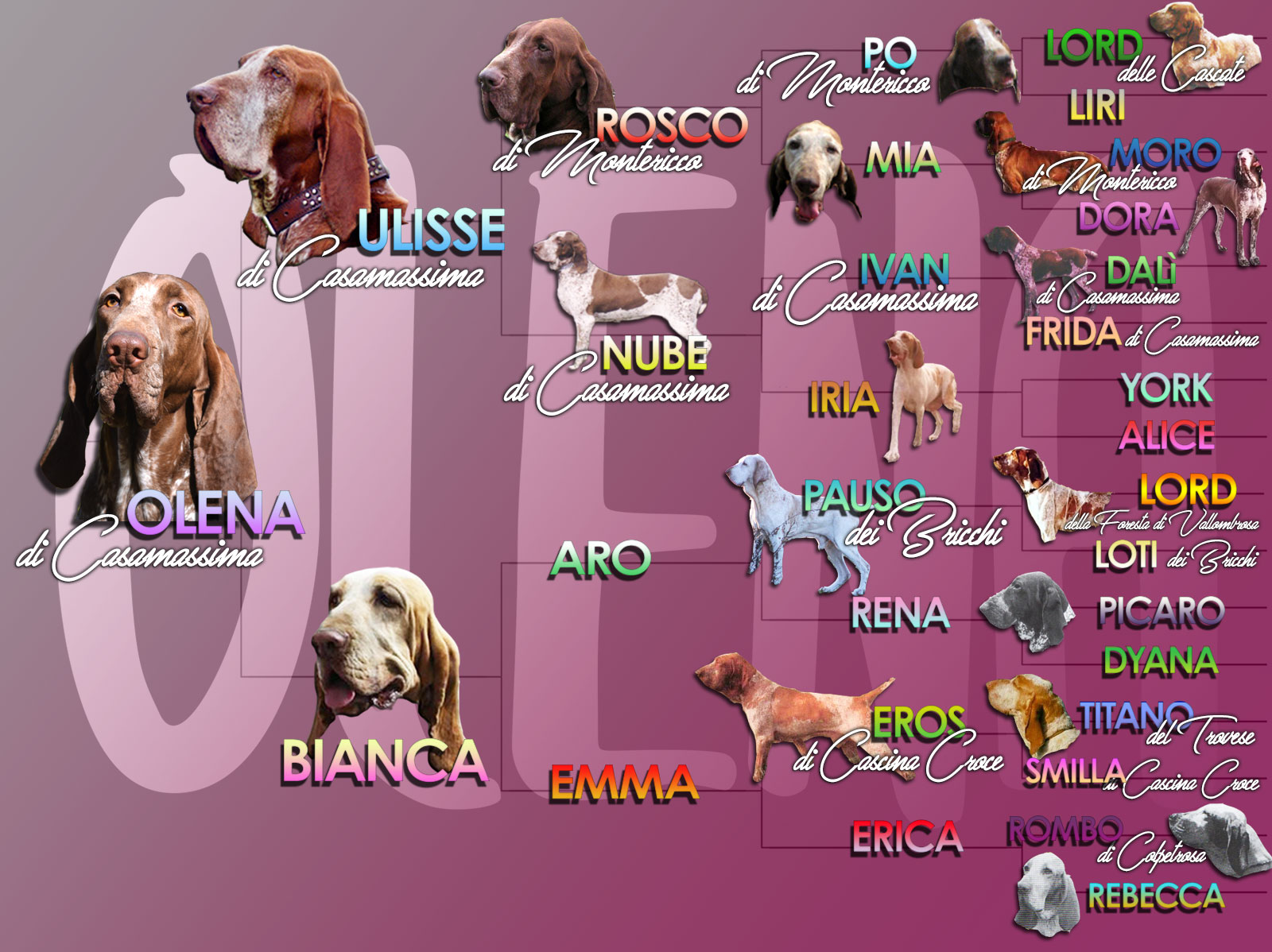 pedigree illustrato bracco italiano