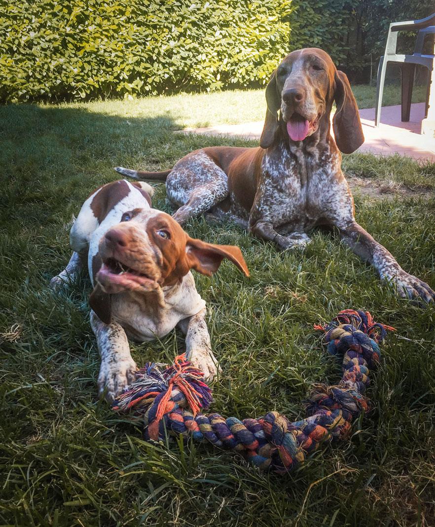 cani gioco giardino