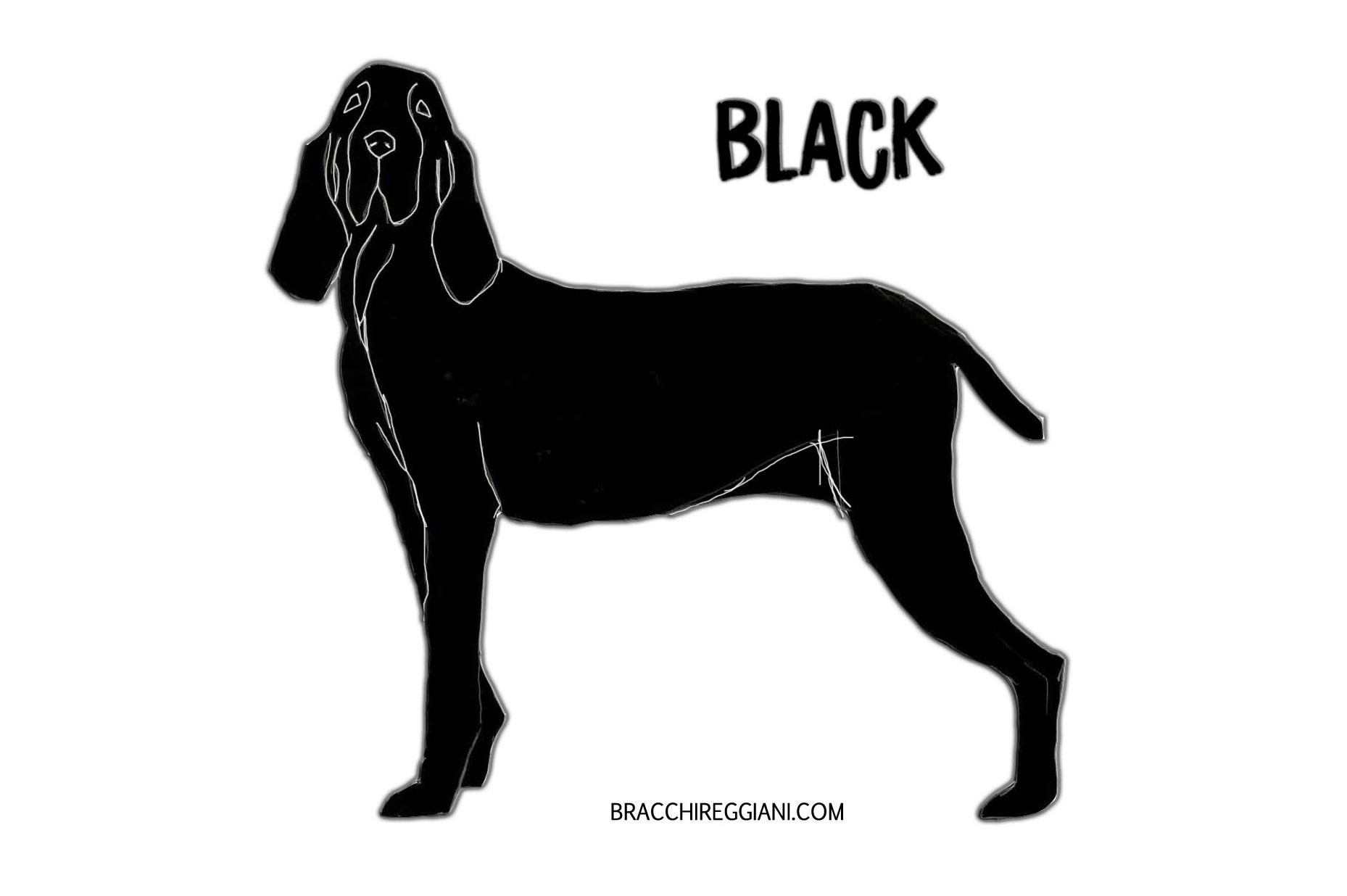 bracco italiano colour black standard