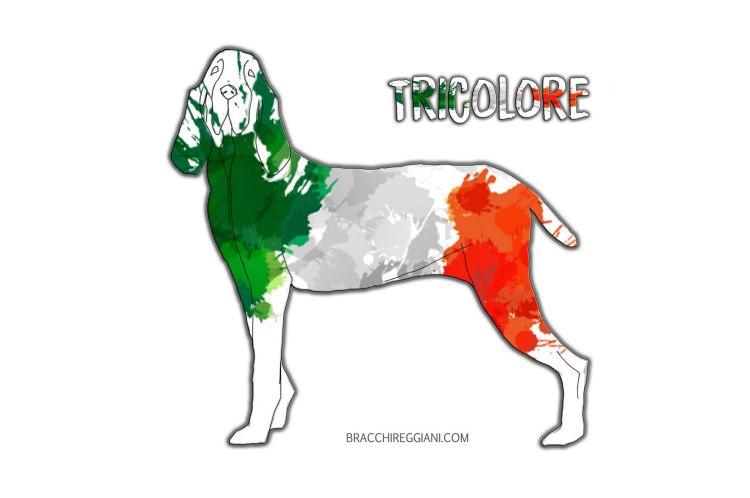 bracco italiano colore mantello tricolore standard
