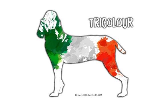 bracco italiano coat colour tricolour standard
