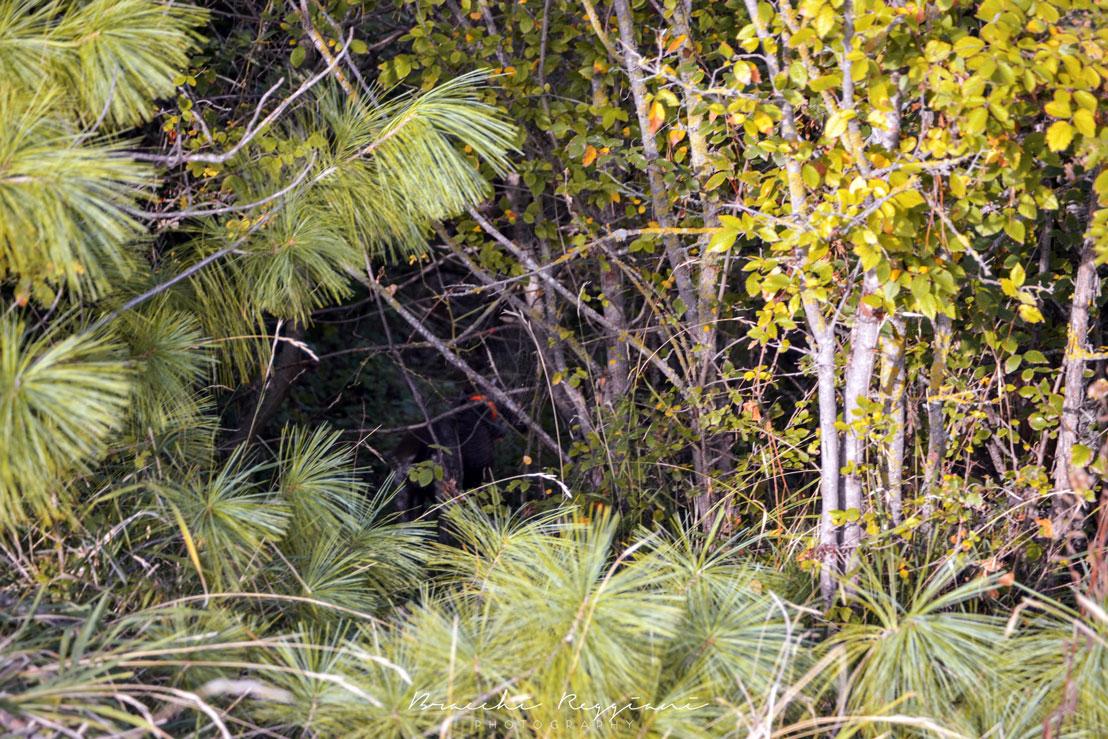 beeper-caccia-cane-bosco