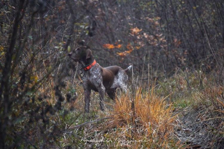 cane a caccia nel bosco