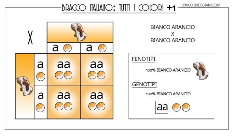 TABELLA-COLORI-BIANCO-ARANCIO-X-BIANCO-ARANCIO