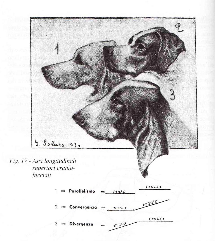 divergenza-convergenza-parallelismo-cane-solaro