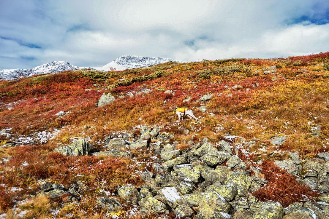 paesaggio-caccia-lapponia-svezia-finlandia